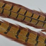 Pheasant Tail Beige